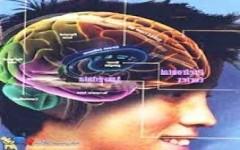 در مغز نوجوانان سرکش واقعا چه میگذرد؟