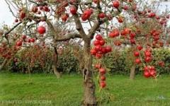 11 دلیل برای خوردن روزی 1 سیب